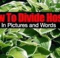 Cómo dividir hostas en imágenes y palabras