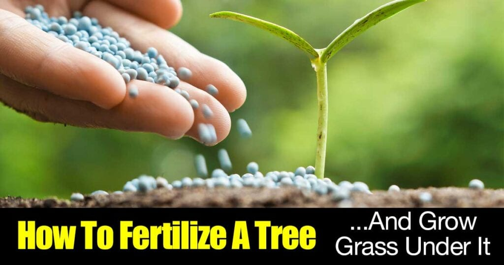 fertilize-tree--1312016