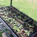 Cómo ganar dinero con el jardín trasero