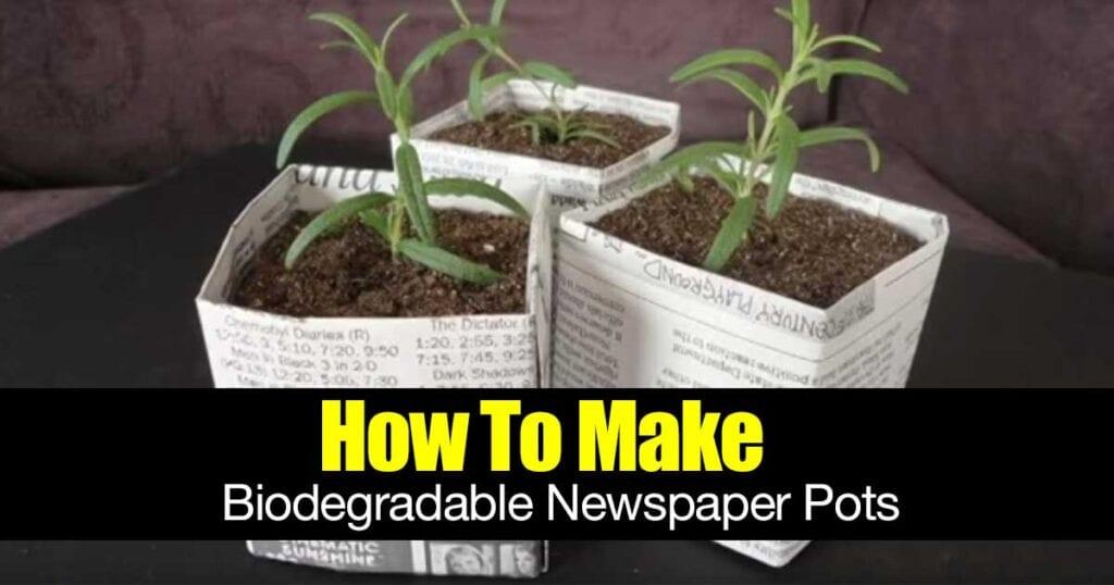 biodegradable-newspaper-pots-01312016