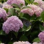 Cómo hacer que el suelo sea ácido (pH más bajo) ⋆ Big Blog Of Gardening