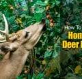 Cómo hacer recetas caseras de repelente de ciervos -