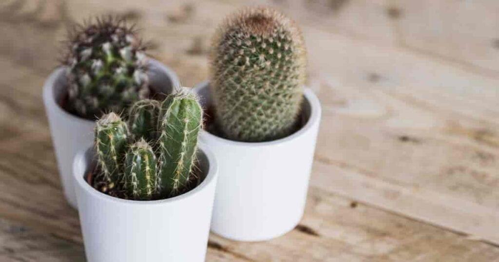 Cómo hacer tierra para macetas de calidad para cactus