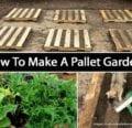 Cómo hacer un jardín de paletas -