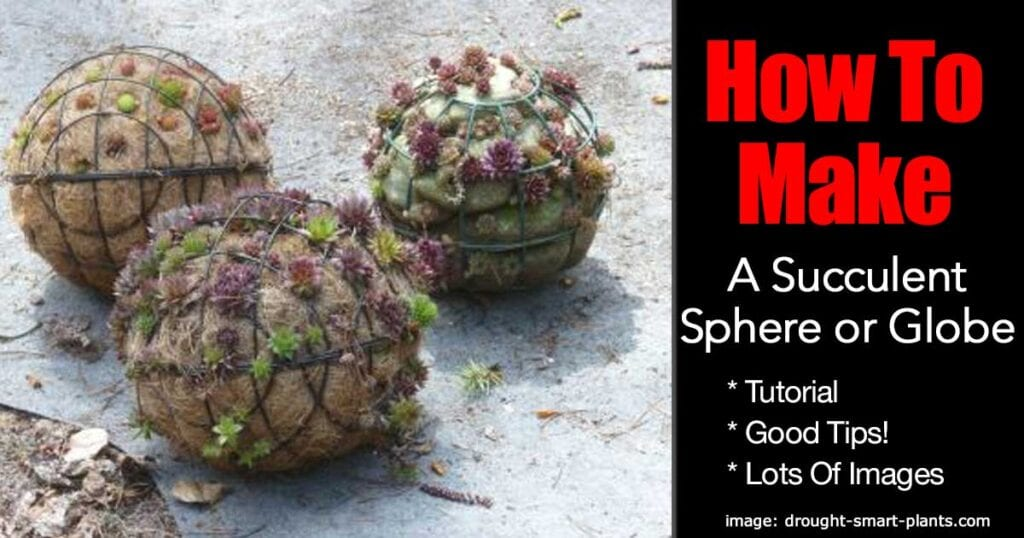 succulent-sphere-globe-03312016