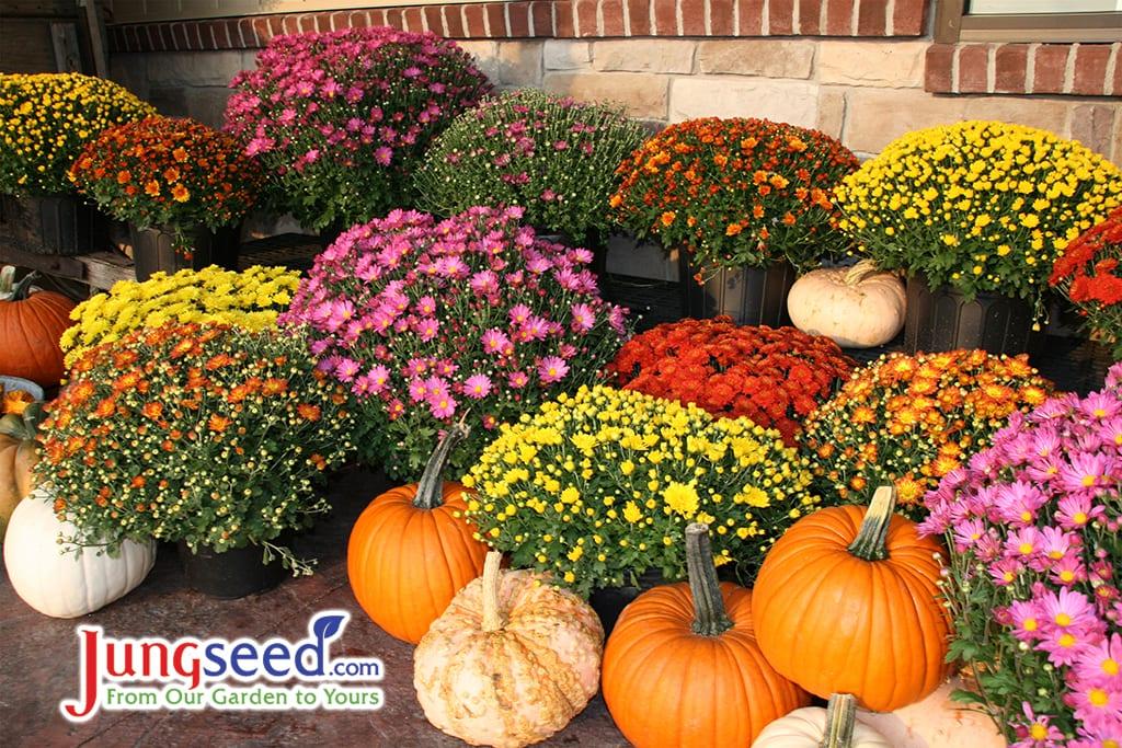 Otoño, otoño, calabazas, calabazas y mamás coloridas