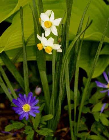 Cómo planificar una flor o un jardín orgánico ⋆ Big gardening blog