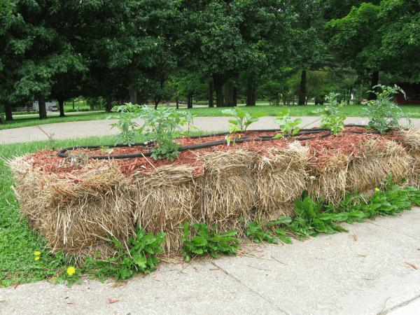 Cómo plantar con éxito un jardín de fardos de paja / heno