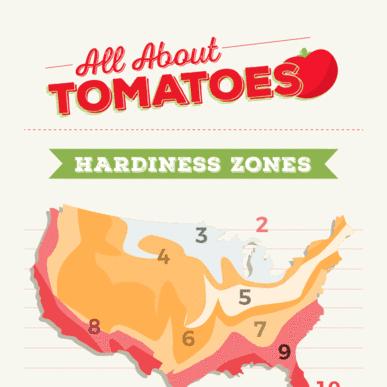 Cómo plantar tomates de la manera correcta