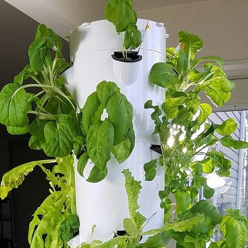 Cómo plantar un jardín de torre vertical