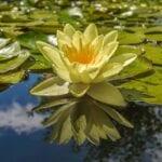 Cómo proteger su estanque de jardín en invierno