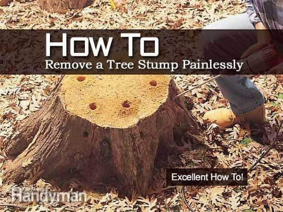 How To Remove A Tree Stump / Tree Stump Removal /Stump Tree Removal
