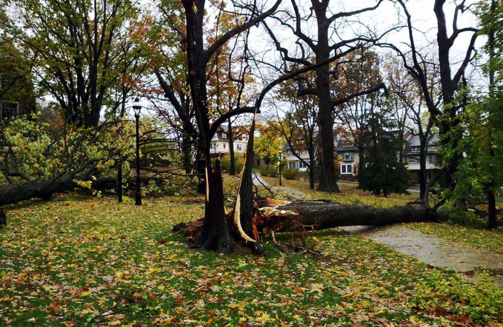 Cómo reparar árboles dañados por la nieve y el hielo ⋆ Gran blog sobre jardinería