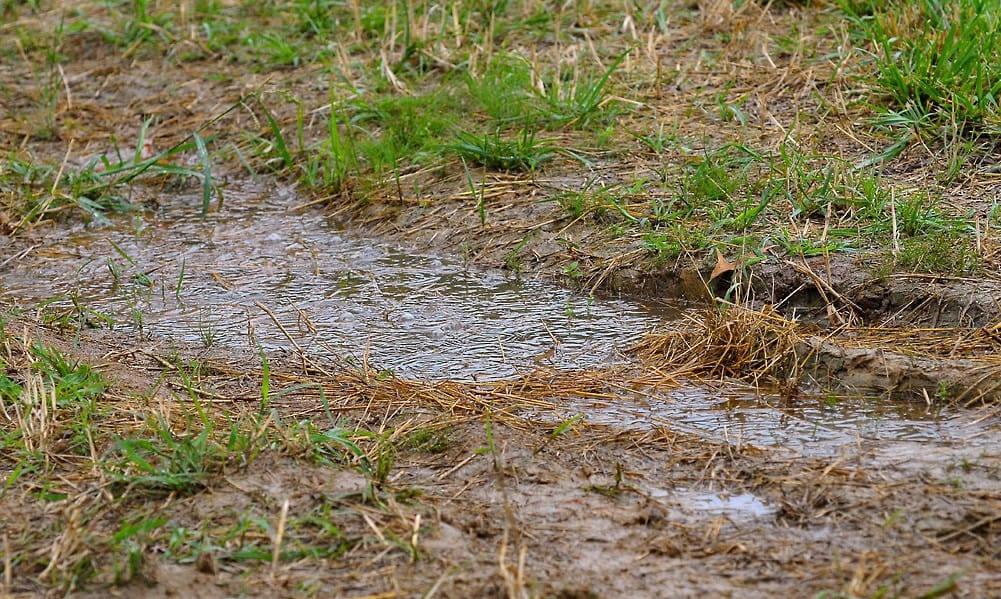 Cómo resolví los problemas de drenaje en mi jardín ⋆ Gran blog sobre jardinería