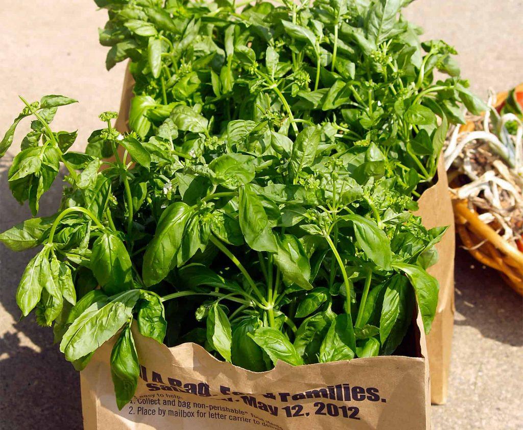 Cómo secar hierbas de jardín rápidamente ⋆ Gran blog sobre jardinería