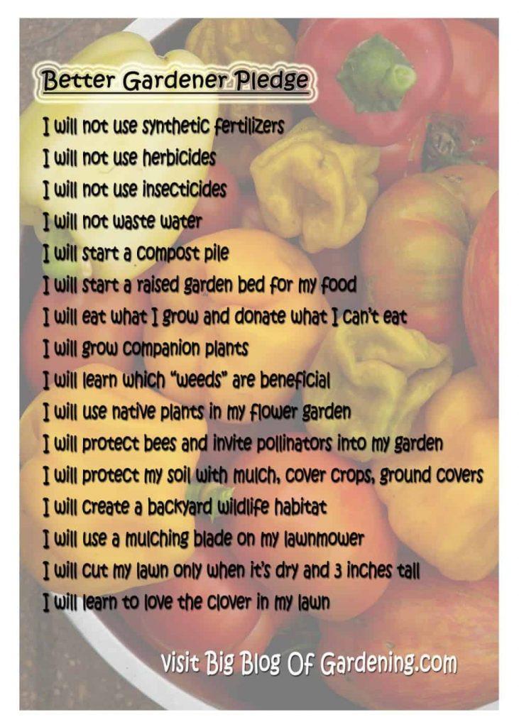 Cómo ser un mejor jardinero ⋆ Gran blog sobre jardinería