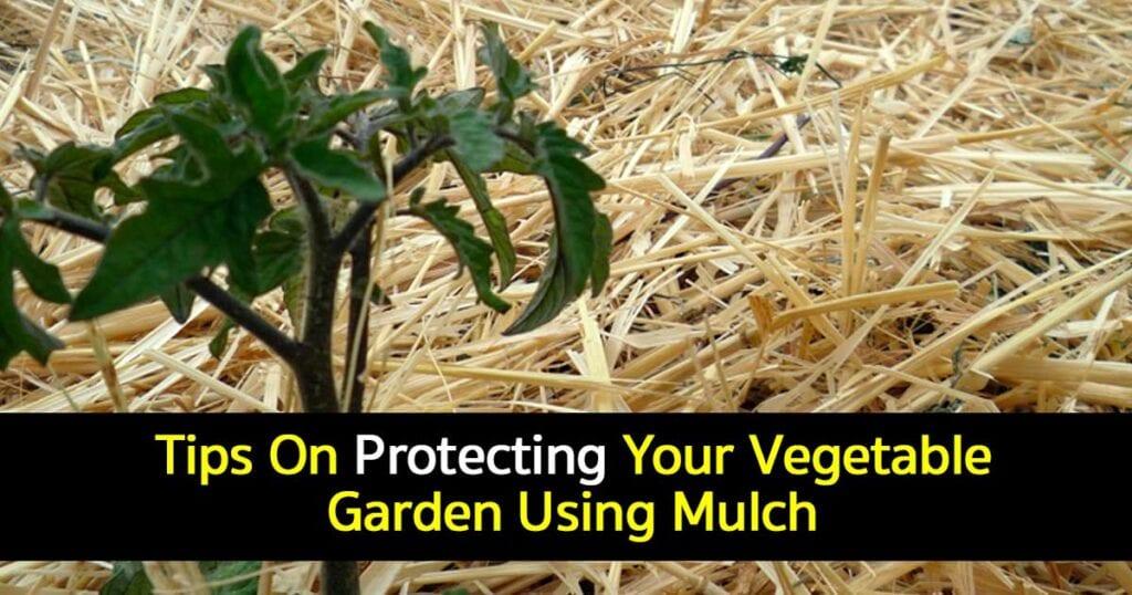 vegetable garden mulch