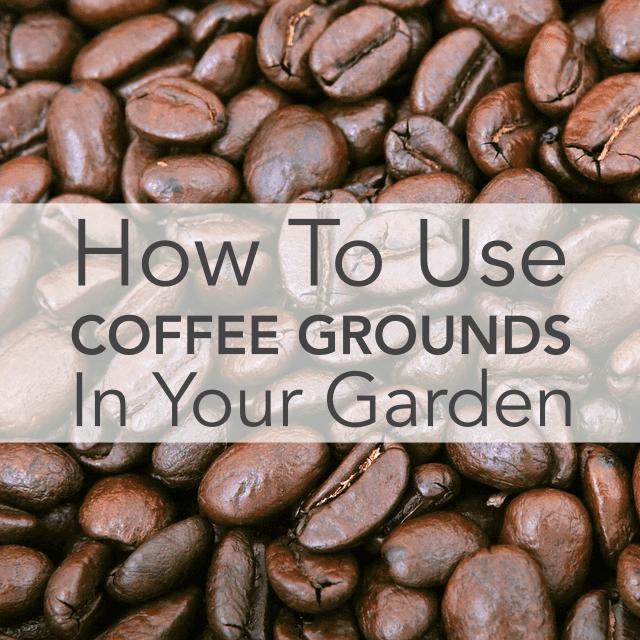 Cómo usar una cafetera en tu jardín