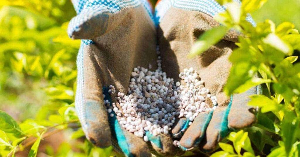 un puñado de fertilizante 10-10-10