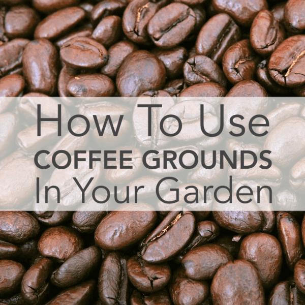 Cómo utilizar cafeteras en su jardín