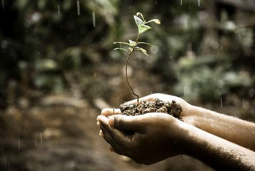 Understanding Soil - A New Course Offered by Mother Earth News