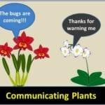 Comunicación de las plantas: ¿pueden las plantas hablar con otras plantas?