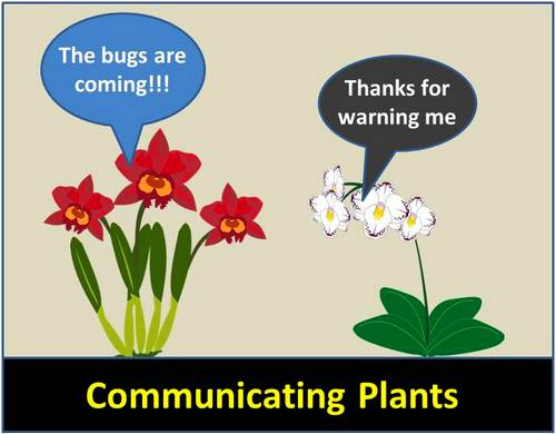Plant Communications - Can Plants Talk to Other Plants?