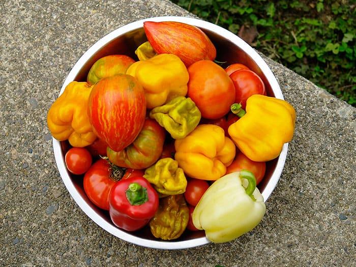 Conceptos básicos de la rotación de cultivos para tu jardín ⋆ Gran blog sobre jardinería