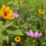 Consejos PRO para cultivar flores silvestres con éxito