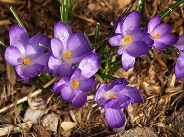 Consejos de jardinería de abril ⋆ Gran blog sobre jardinería