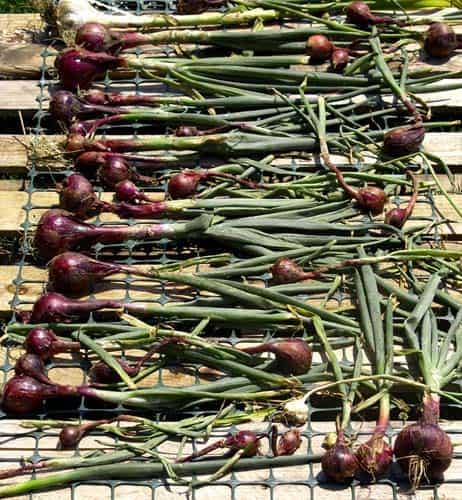Consejos de jardinería de agosto ⋆ Gran blog de jardinería