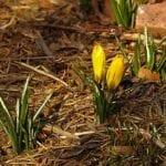 Consejos de jardinería en invierno