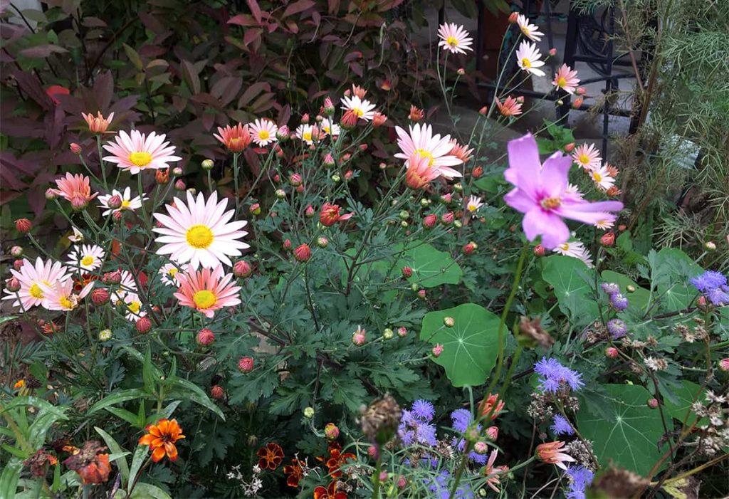 Consejos de jardinería de noviembre ⋆ Gran blog sobre jardinería