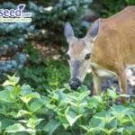 Consejos de jardinería resistentes a los ciervos |  Blog de jardinería Jung Seed