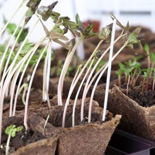 Consejos para colocar sus semillas en interiores