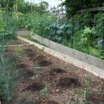 Consejos para comenzar su primer jardín orgánico ⋆ Gran blog de jardinería