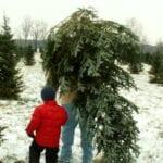 Consejos para comprar un árbol de Navidad recién cortado ⋆ Gran blog de jardinería