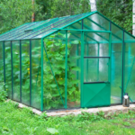 Consejos para cultivar plantas más grandes y que crezcan en un invernadero