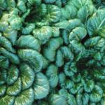 Consejos para cultivar hermosos verdes otoñales