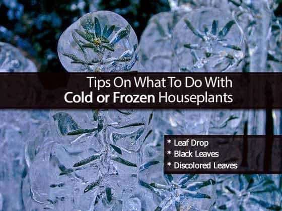 cold-frozen-plants-2-102713