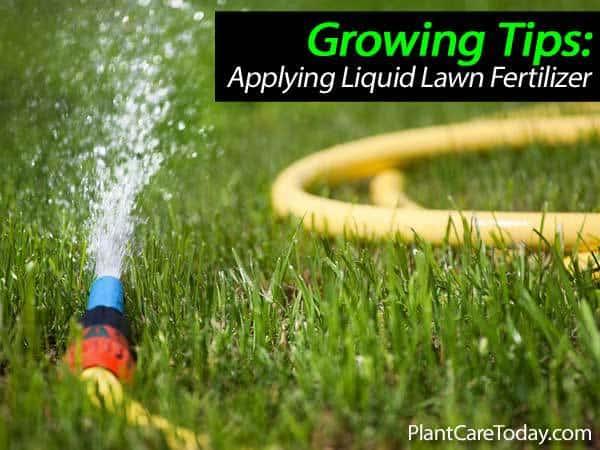 fertilizante líquido para césped-031514