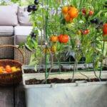 Contenedor de jardinería para principiantes |  Blog de jardinería Estiercoles.com