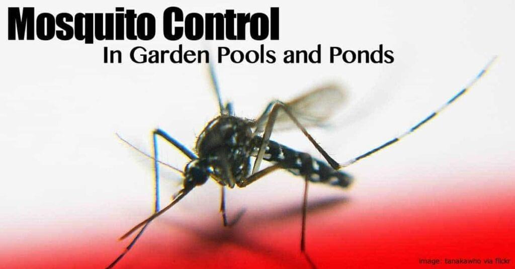 mosquito-control-pool-pond-093014