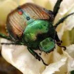 Control de plagas de abono - mitos del jardín