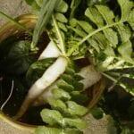 Cosecha en el jardín de otoño: rábano Daikon, espinaca y cebollino