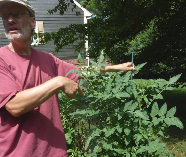 Cría de pimientos y tomates |  Intercambio de semillas de exposición al sur