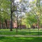 Cuidado orgánico del césped de la Universidad de Harvard ⋆ Gran blog de jardinería