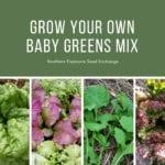 Cultiva tu propia mezcla de verduras para bebés