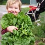 Cultiva un jardín de ensaladas de primavera (rápido): la guía rápida