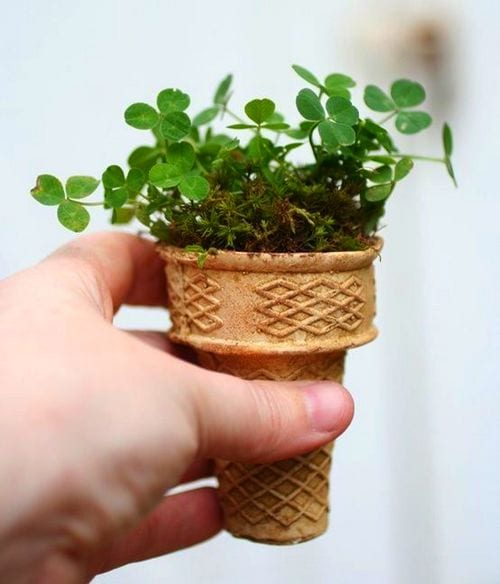 Growing Seeds in Ice Cream Cones - Great Idea or Ultimate Stupidity?